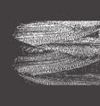 grunge texture distress black grey rough trace a vector image vector image