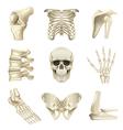 Human bones icons set vector image vector image