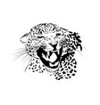 leopard jaguar tiger big cat predator logosvg vector image vector image