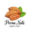 pecan nuts in cartoon style vector image