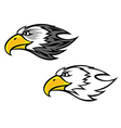 cartoon falcon or hawk head vector image