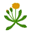 Dandelion plant vector image