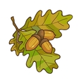 Acorn on oak branch with leaves vector image
