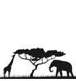 an african safari animal savannah silhouette vector image