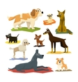 Different Dog Breeds Collection vector image