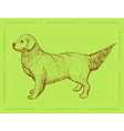 Dog Golden Retriever on a green ornamental backgro vector image