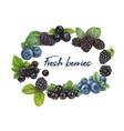 fresh berries hand drawn vector image vector image
