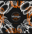 mango design template hand drawn tropic fruit on vector image vector image