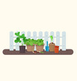seedlings in plastic and biodegradable peat pots vector image vector image