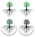 tree with root vector image vector image