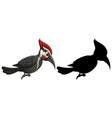 woodpecker characters and its silhouette on white vector image vector image