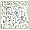 collection hand drawn flowers and herbs vector image vector image