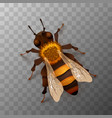 detailed realistic honey bee insect on vector image vector image