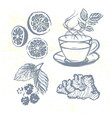 ink hand drawn tea elements collection vector image