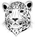 leopard vector image vector image