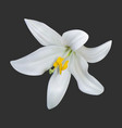realistic white lily on a dark background vector image vector image