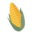 corn fresh isolated icon vector image