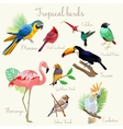 Bright color Exotic tropical birds set isolated vector image vector image