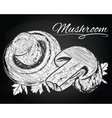 mushrooms on the chalkboard background vector image vector image