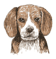 Beagle head vector image