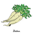 calligraphy daikon coloured poster vector image