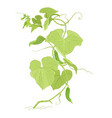 cucumber plant colour sketch green leaves one vector image vector image