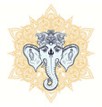 Hand drawn Elephant Head on ornament background vector image vector image