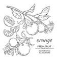 orange set vector image