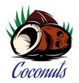 picture with three broken coconuts vector image