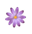 purple isolated flower flower like a daisy vector image vector image