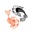 two japanese carp koi fishes isolated on white vector image