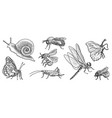 drawing set insects vector image