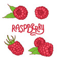 hand drawn raspberry set isolated on white vector image