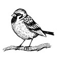 sparrow bird engraving vector image vector image