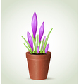 Violet crocuses in flower pot vector image