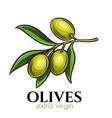 hand drawn olives icon vector image