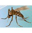 mosquito net and mosquito vector image vector image
