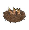 nestling bird in nest color sketch engraving vector image vector image