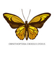 set hand drawn colored ornithoptera vector image vector image