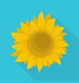summer sunflower icon flat style vector image