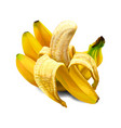 banana sweet fruit vector image vector image