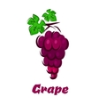 Cartooned grape vine with bunch and leaves vector image vector image
