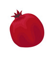 flat icon of fresh bright red pomegranate vector image vector image