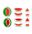 watermelon and slices isolated on white vector image vector image