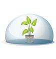 A plant in a pot inside a transparent dome vector image vector image