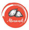 aldmont nuts vintage hand drawing of almonds vector image