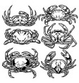 drawing vintage crab animal set seafood vector image