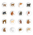 monkey types icons set in flat style vector image vector image