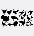 turkey and duck poultry animal silhouette vector image