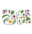 beautiful hand drawn floral vector image